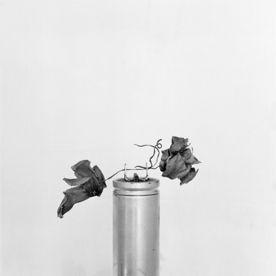 Fusible en flor, 2011 // Silver gelatin print
