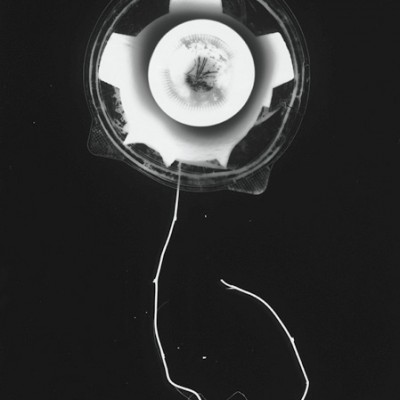 Blume 11, 2011 / photogram on silver gelatin paper / ca. 30,5 x 40,6 cm