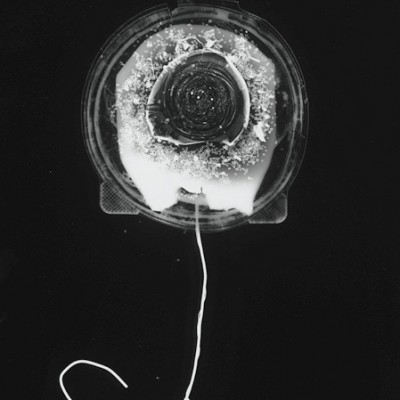 Blume 12, 2011 / photogram on silver gelatin paper / ca. 30,5 x 40,6 cm