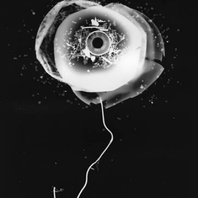 Blume 7, 2011 / photogram on silver gelatin paper / ca. 24 x 30,5 cm