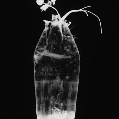 Flasche 9, 2011 / photogram on silver gelatin paper / ca. 30,5 x 40,6 cm