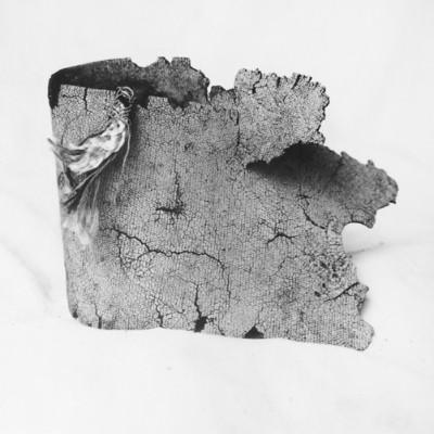 Arrecife 13, 2012 / Silver gelatin print /