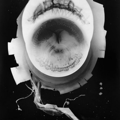 Abisal 2, 2012 / photogram on silver bromide paper / ca. 13 x 18 cm