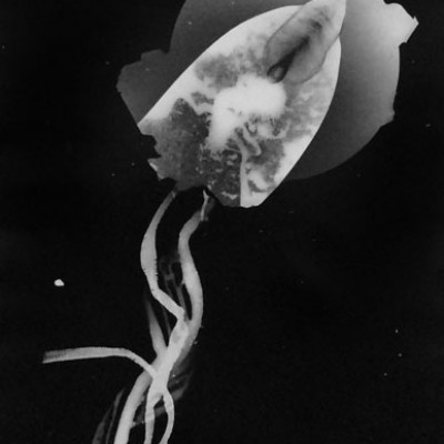 Abisal 9, 2012 / photogram on silver bromide paper / ca. 13 x 18 cm
