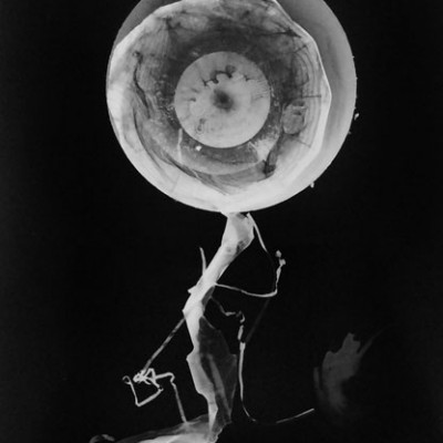 Abisal 11, 2012 / photogram on silver bromide paper / ca. 13 x 18 cm