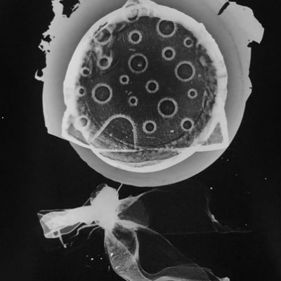 Abisal 14, 2012 / photogram on silver bromide paper / ca. 13 x 18 cm