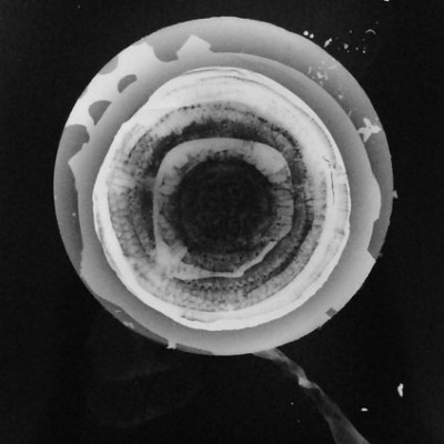 Abisal 17, 2012 / photogram on silver bromide paper / ca. 13 x 18 cm