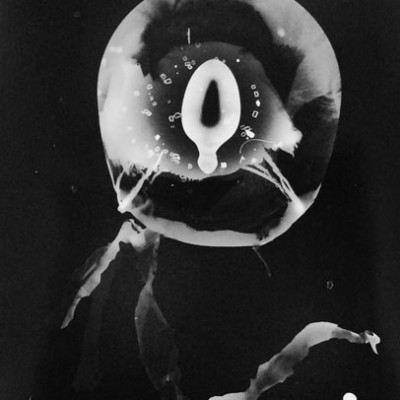 Abisal 20, 2012 / photogram on silver bromide paper / ca. 13 x 18 cm