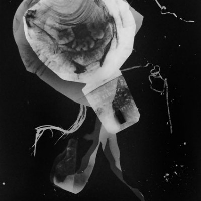 Abisal 21, 2012 / photogram on silver bromide paper / ca. 13 x 18 cm