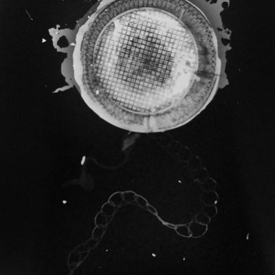 Abisal 26, 2012 / photogram on silver bromide paper / ca. 13 x 18 cm