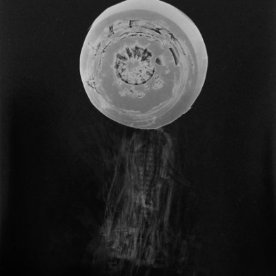 Abisal 35, 2013 / photogram on silver bromide paper / ca. 13 x 18 cm