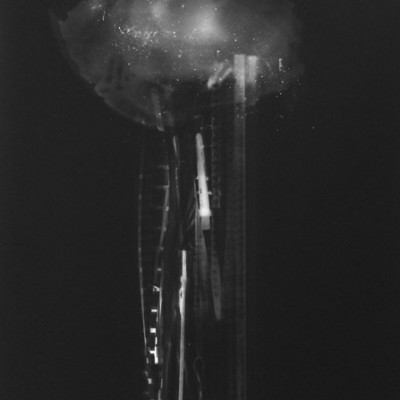 Abisal 41, 2013 / photogram on silver gelatin paper / ca. 30,5 x 40,6 cm