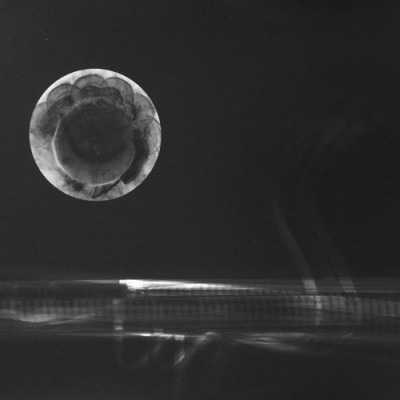 Mar y luna, 2013 / photogram on silver gelatine paper / ca. 30,5 x 40,6 cm