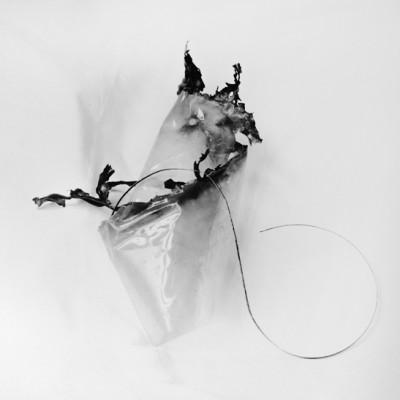 Fly 8, 2014 / Silver gelatin print /